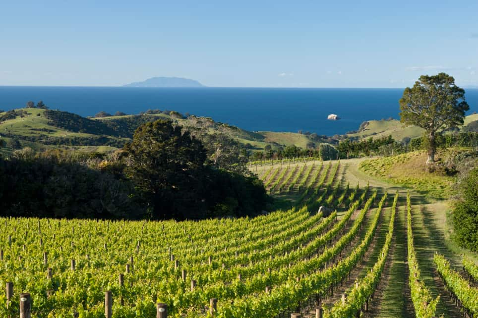 Best Waiheke Island Wineries