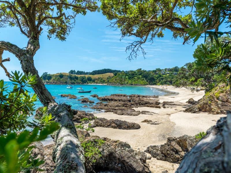 waiheke island guide